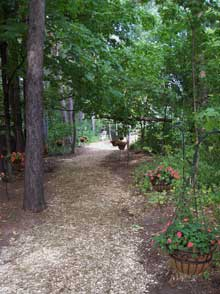 Wooded trail line with hanging baskets